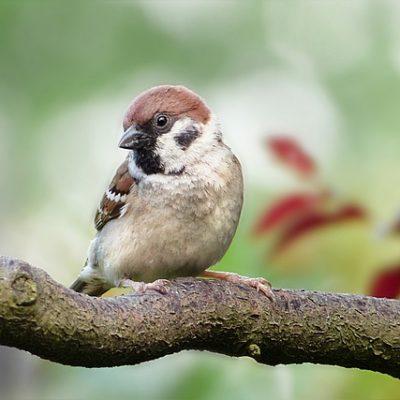My Eye is On the Sparrow